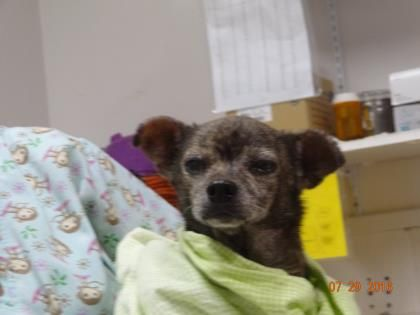 15yo Help Get Her Out Hssm Gulfport Ms Animals Gulfport Dogs