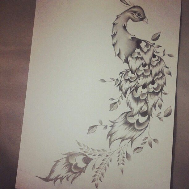 Peacock feather drawing tattoo - photo#36