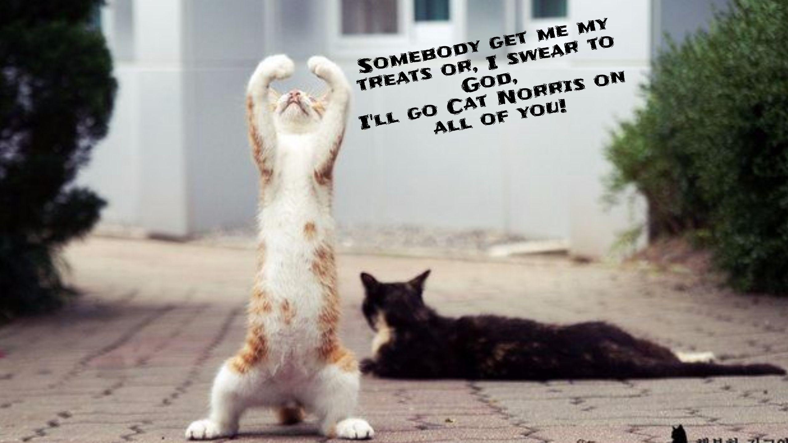 Https Www Youtube Com Watch V I9cdnc48qde Funny Cat Memes Cat Memes Funny Cats