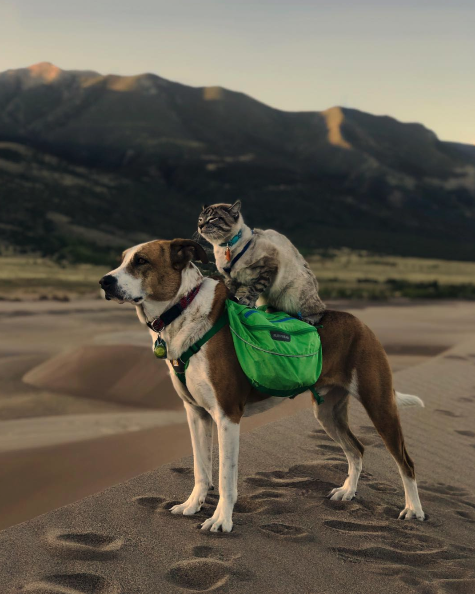 This rescue dog and cat duo are the most adorable adventure buddies