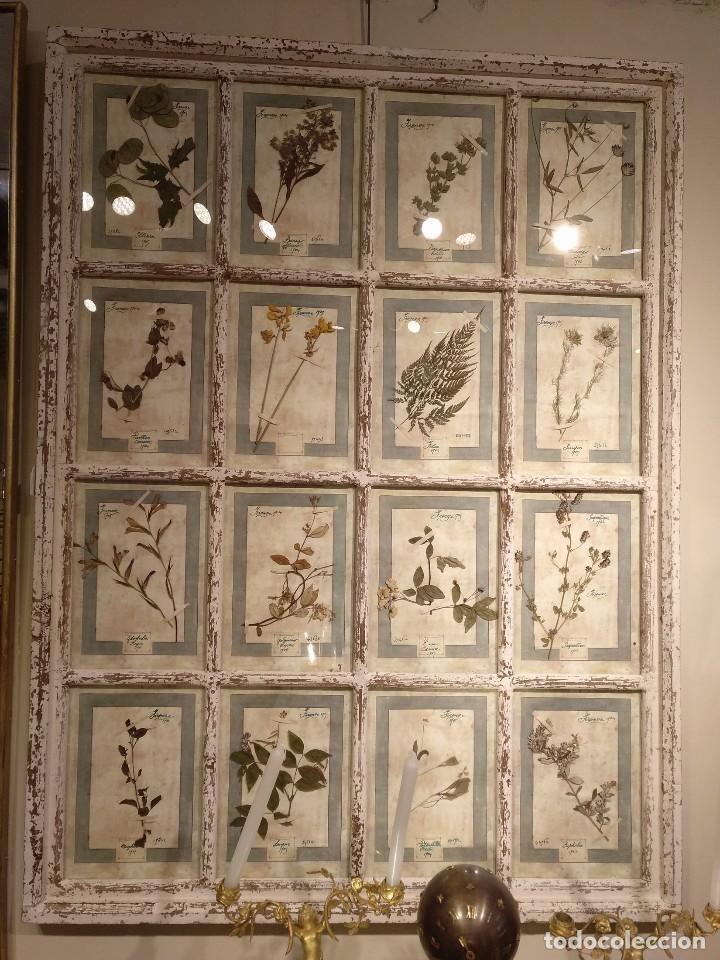 Gran cuadro herbolario siglo xix 147x109 cm | Pinterest | Siglo xix ...