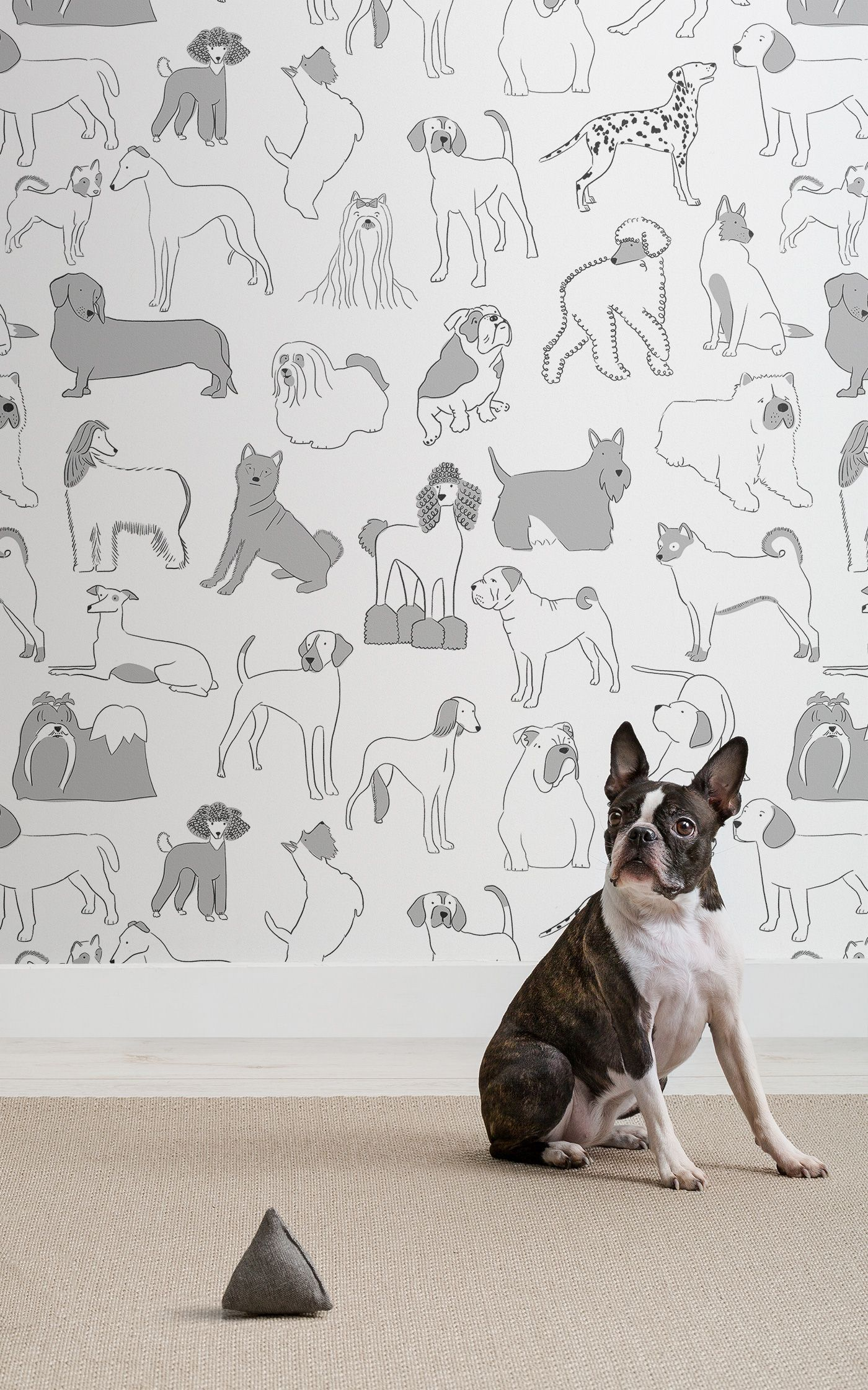 Dog Patterned Wall Coverings From Murals Wallpaper Dog Milk Mural Wallpaper Dog Wallpaper Animal Decor