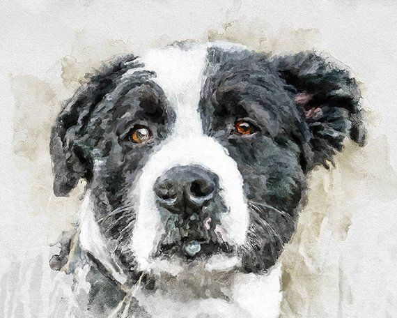 Dog Watercolor Portrait Original Pet Portraits Animal Art Pet