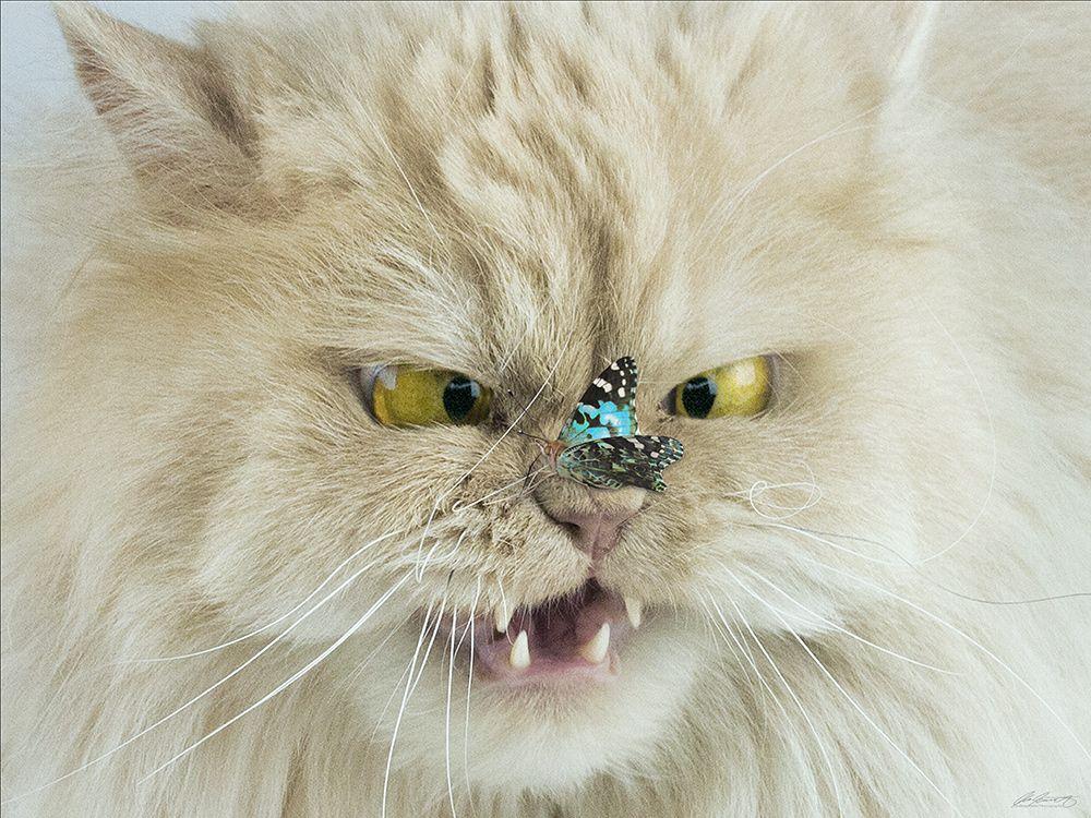 Schielende Katze Belarus