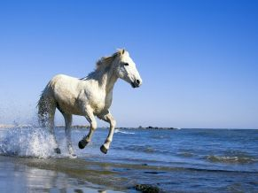 Animals Wallpapers Hd Desktop Hd Wallpapers For Widescreen Mobile Page 7 Horse Wallpaper Beautiful Horses Camargue Horse