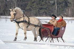 If you are looking for an outdoor winter activity that does not take a lot of exertion than a sleigh...