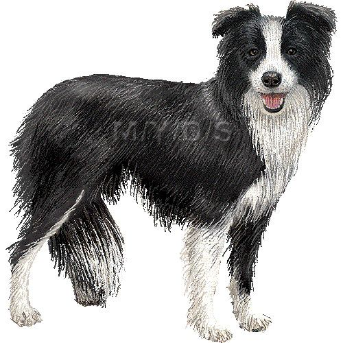 Border Collie Clipart Graphics Free Clip Art Border Collie Dog Drawing Collie