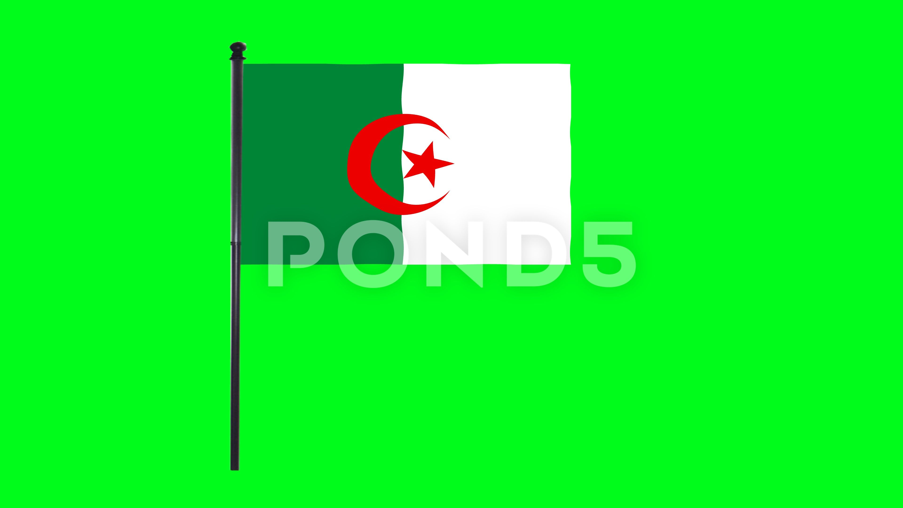 4k Algeria Flag Is Waving In Green Screen Stock Footage Ad Waving Flag Algeria Green With Images Greenscreen Algeria Flag Christmas Design