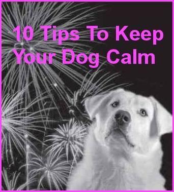 Calming Dog Videos