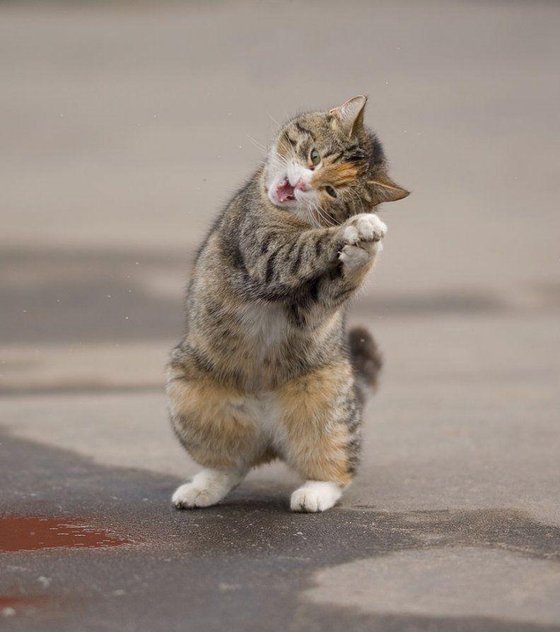 Благодарность, фото кота прикольное с надписью
