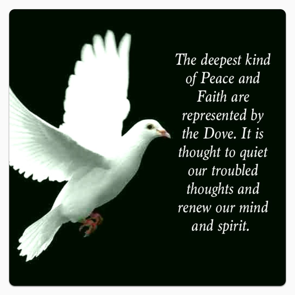Spiritual Love Quotes: Doves, So Very Peaceful..
