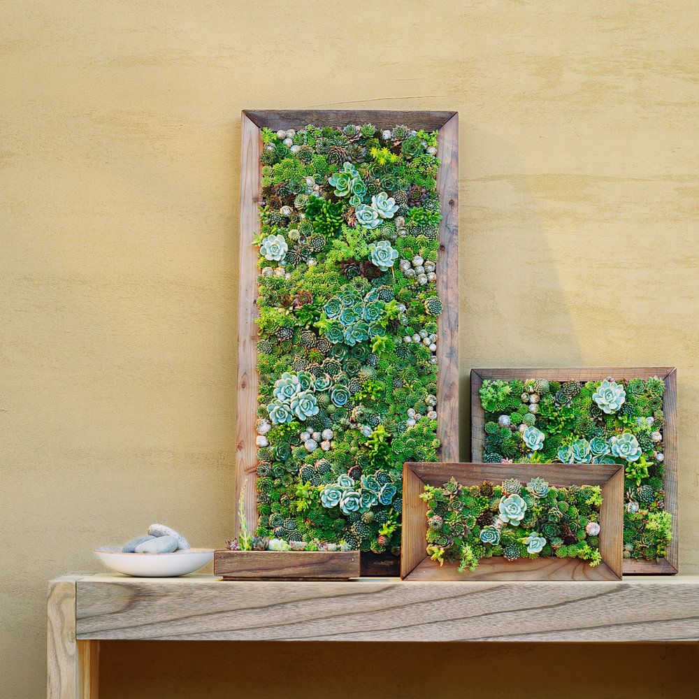 Make Your Own Living Succulent Art | Living walls, Vertical ...