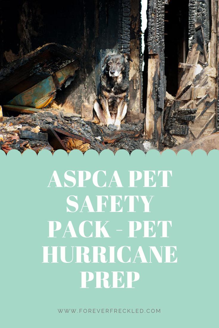 Preparing Your Pet For Hurricane Season Top Tips From A Florida Vet Pets Hurricane Aspca