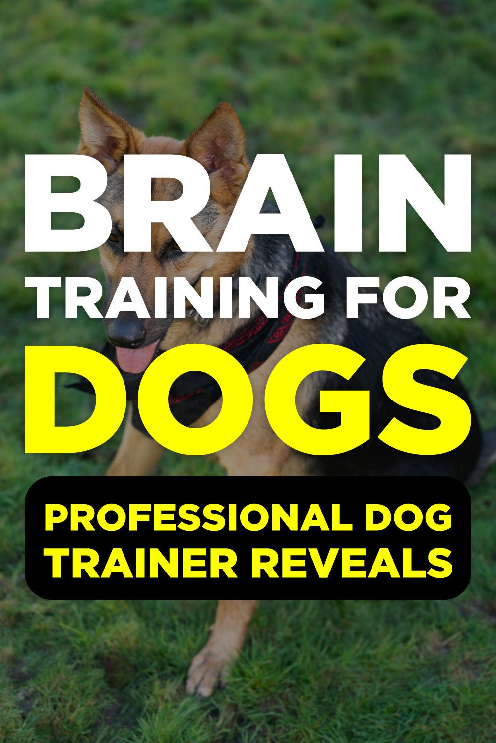 Brain Training For Dogs Review Dog Training Videos Puppy
