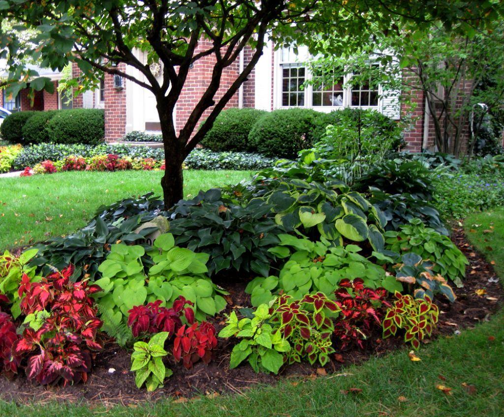 Old Rosedale Garden : Coleus Used In Shade Garden : Some ...
