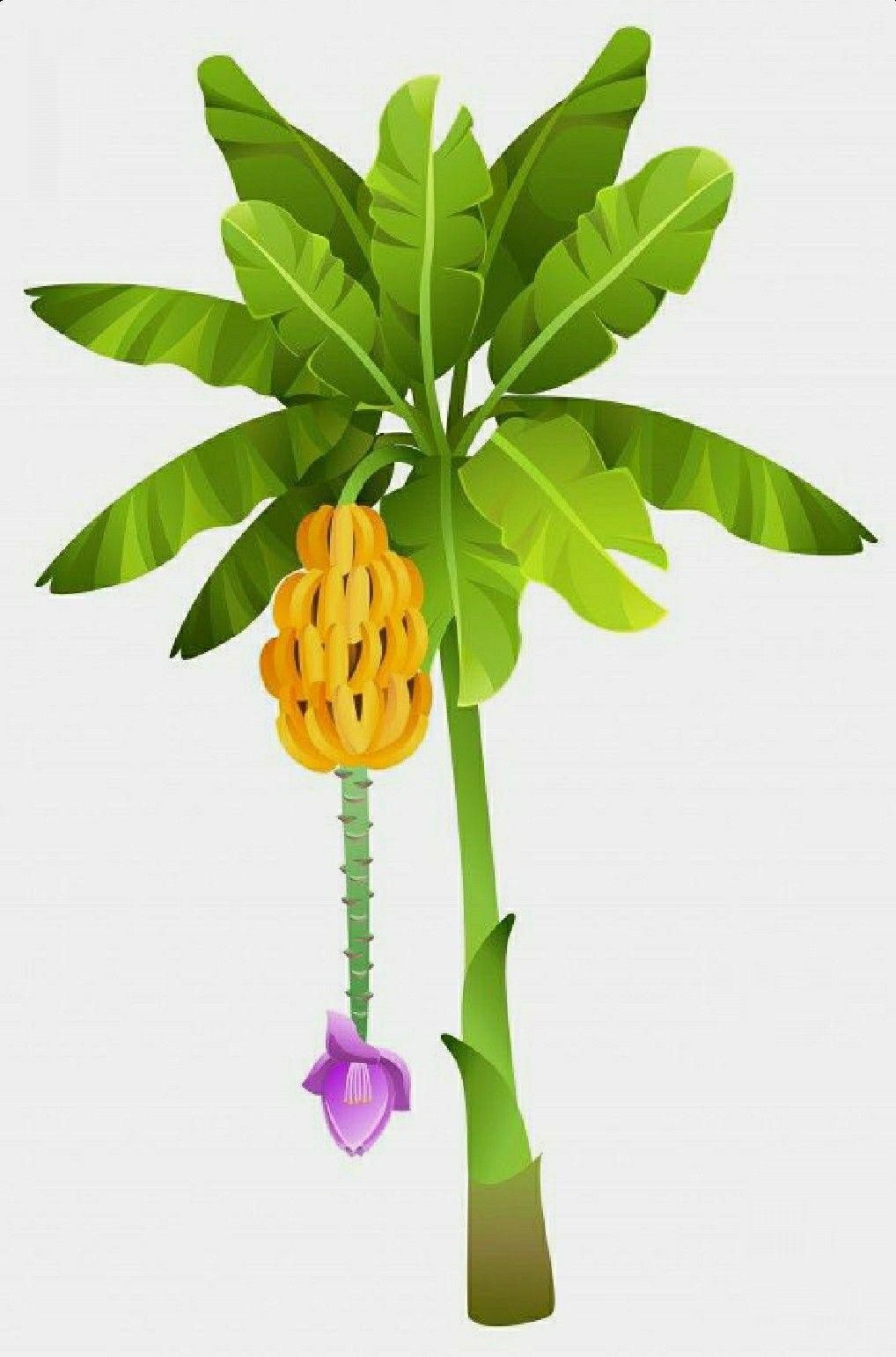 Pin By Hi On Chicken Coop Banana Tree Cartoon Banana Tropical