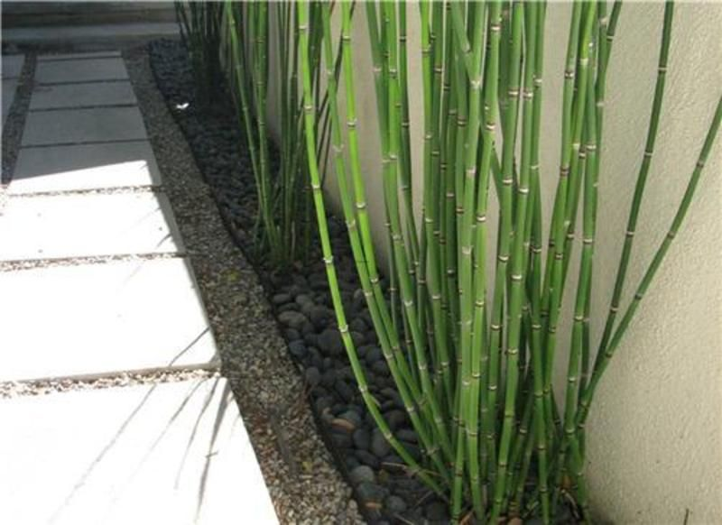 Modern garden plants garden hangout and landscaping for Modern outdoor plants