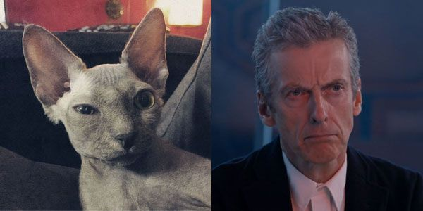 "Hairless cats that look like Peter Capaldi, crossposted by The Mary Sue from the original on Catster, with three all-new cat and Peter Capaldi pairings! Just in time for the 2014 Doctor Who Christmas special, ""Last Christmas""!"