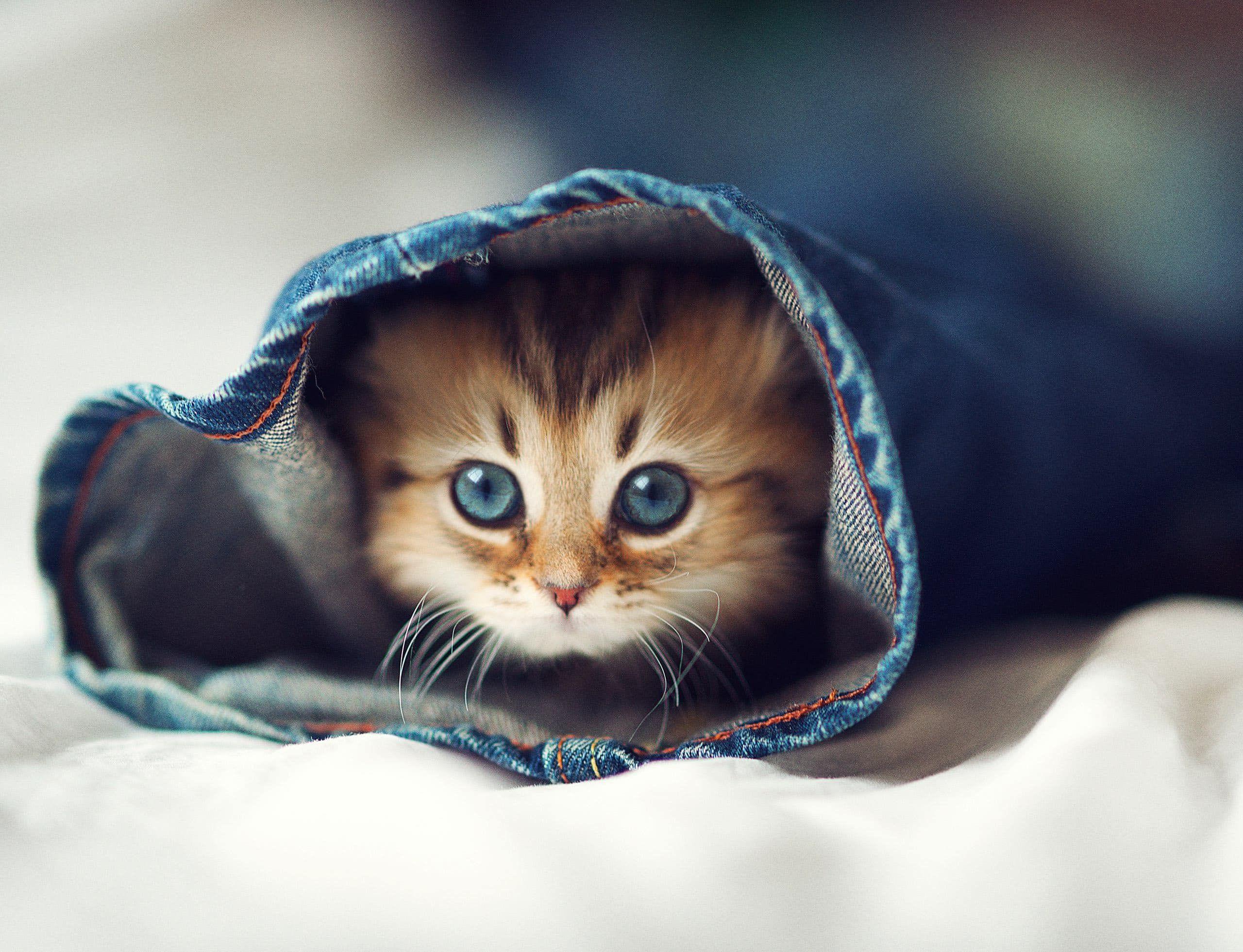 Beau Chaton Beautiful Kitten Voyage Onirique En 2020 Cute Kittens Animaux Les Plus Mignons Bebes Animaux Mignons