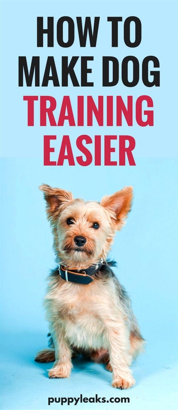 Dog Training Lead 30 Ft Dog Training Vermont Dog Training