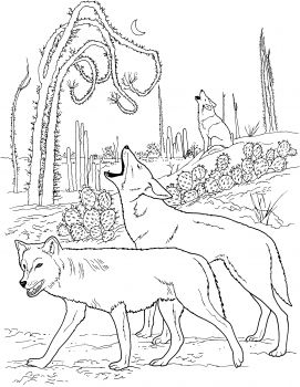 Coyotes Howling In Desert | COLORING PAGES