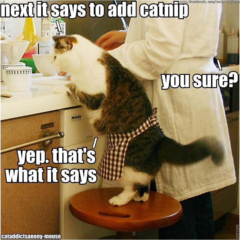 next it says to add catnip. / you sure??