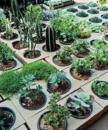 Por dentro da ceagesp gardens for Suculentas santiago