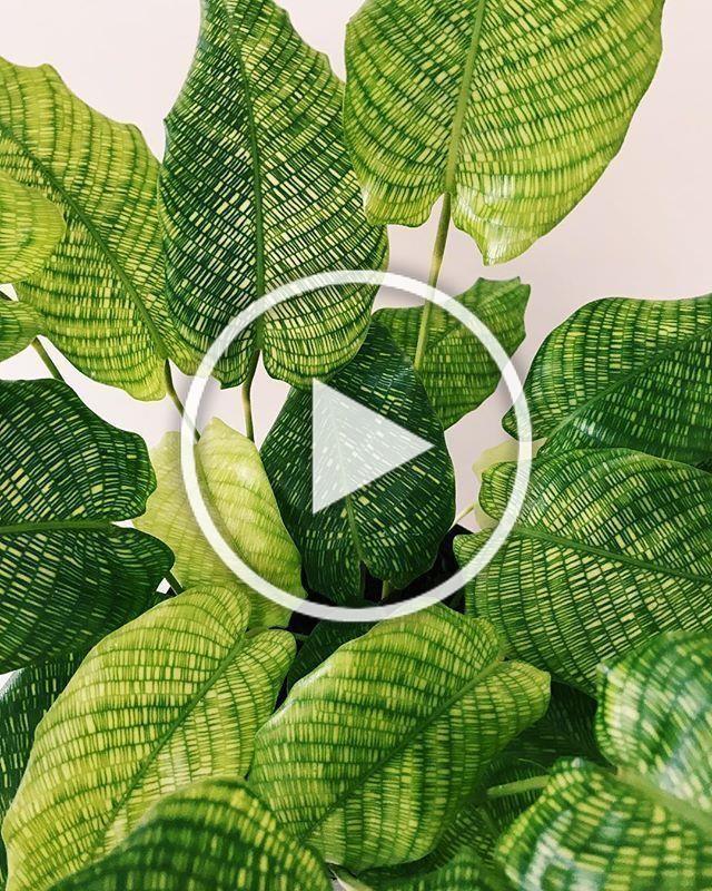 Indoor plants names, Plants, House plants indoor ...