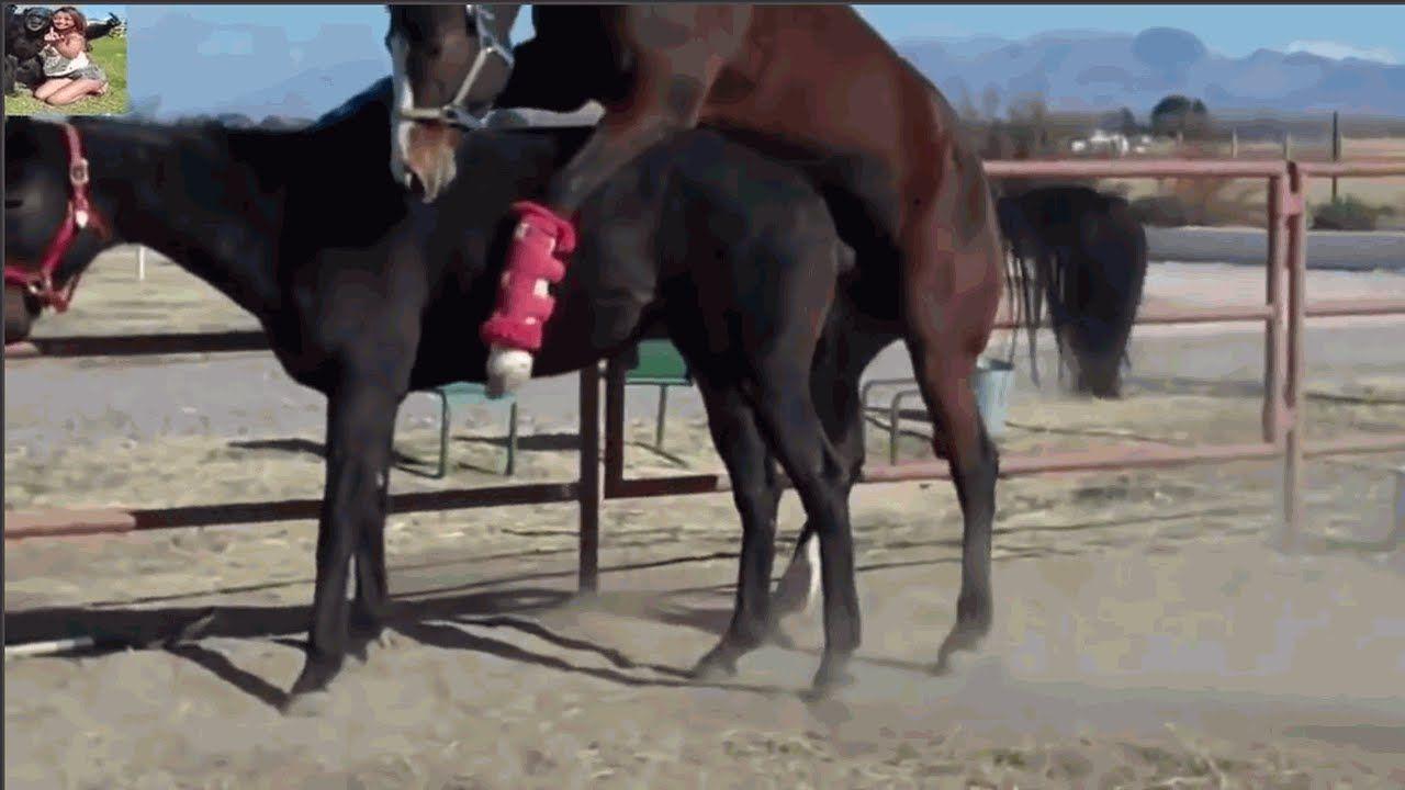 تزاوج الخيول الحصانة تزاوج الحيوانات عالم الحيوانات Animals Horses Youtube