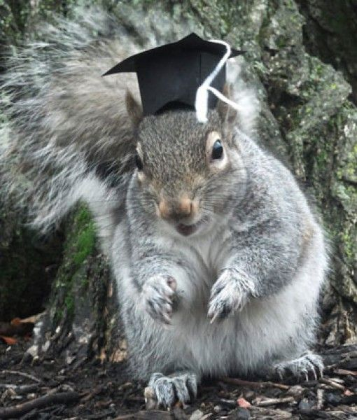 Image result for squirrel wearing graduation cap