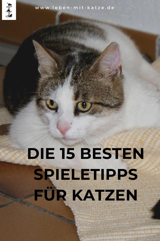 Katzenspiele Kostenlos