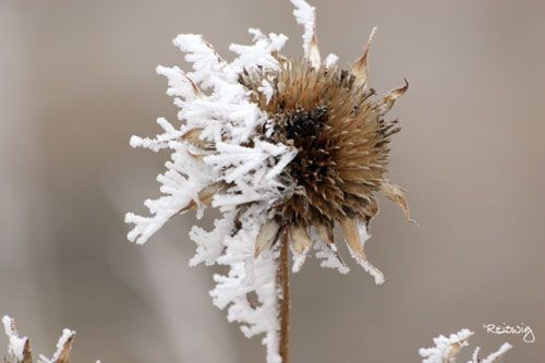 Frosted_mini_wheat_by_ShannonReiswig