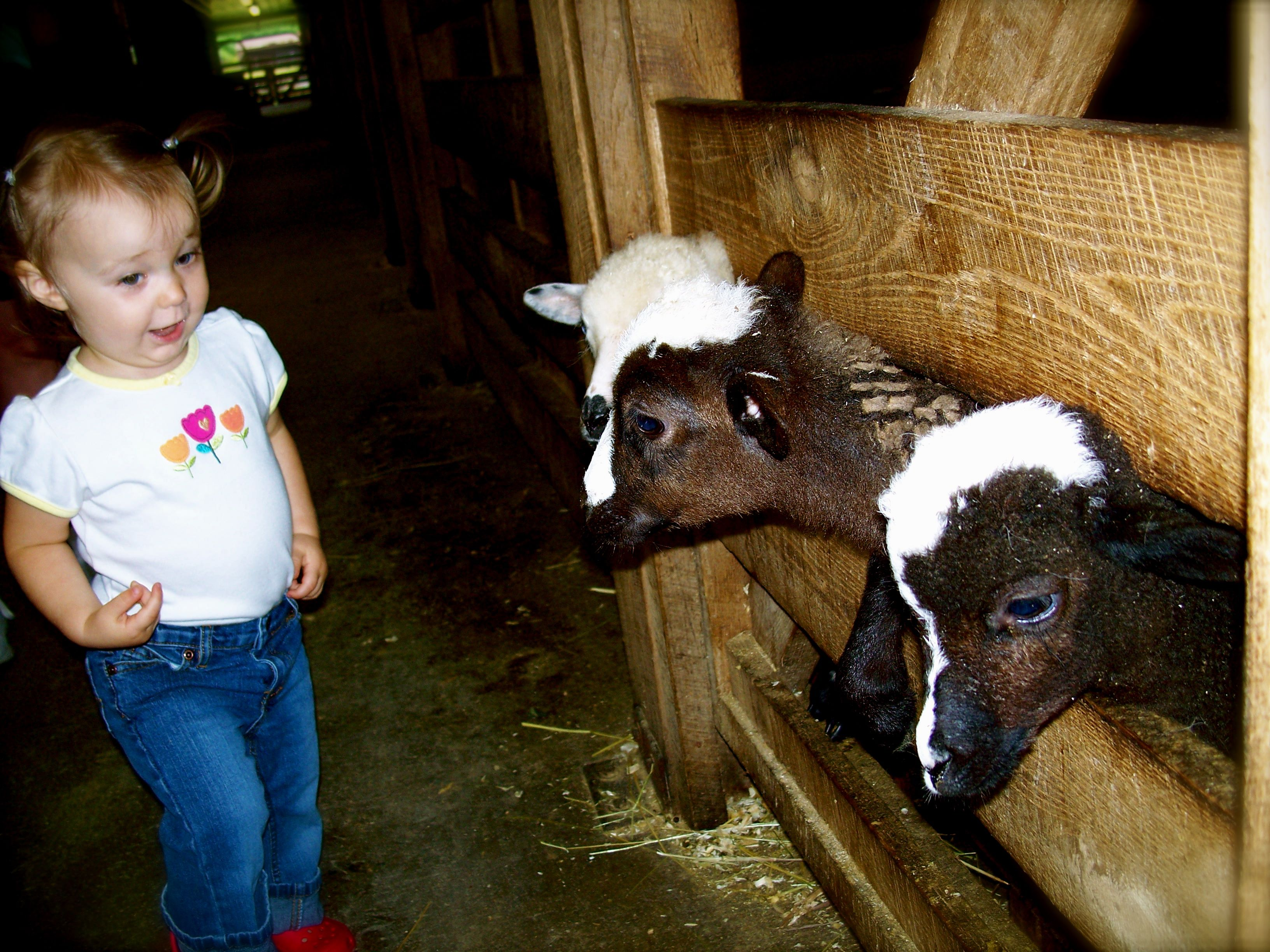 Visit a local farm.  Name the animals while encouraging phonics: c, c, c, cow.   g, g, g, goat. Learning can be anywhere!