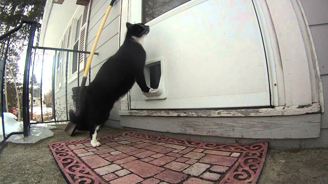 Cat Door Bell Cat door, Cats, Crazy cats