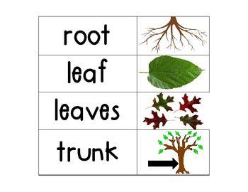 Kindergarten Science Vocab Plants/ Flower   Education   Pinterest ...