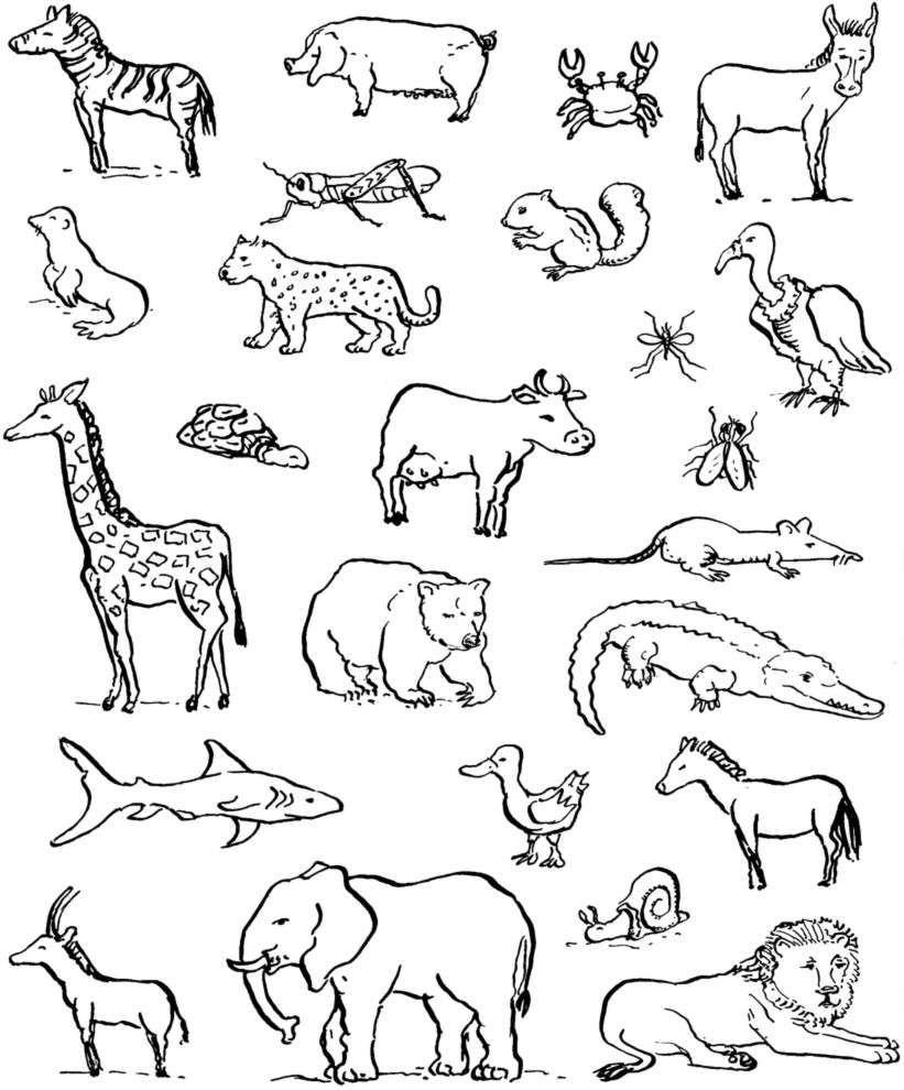 Disegni Da Colorare Di Animali Onnivori.Disegni Da Colorare Di Animali Carnivori Coloradisegni