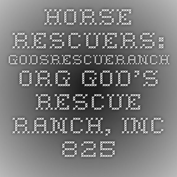 Contact Us All Gods Creatures Horses Rescue