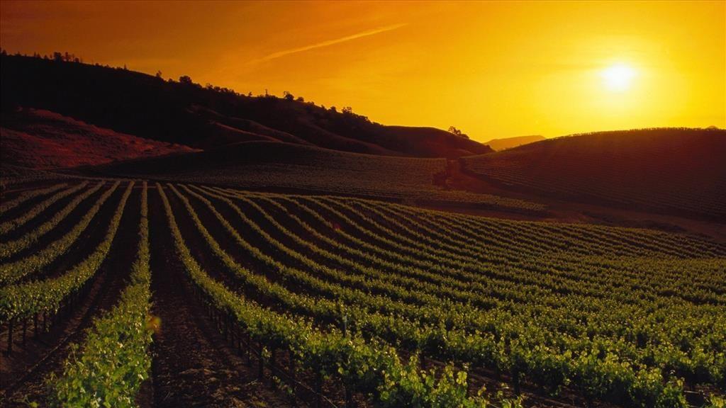 Fond D Ecran Vignes Sous Le Coucher De Soleil Coucher De Soleil Napa Valley Papier Peint Coucher De Soleil