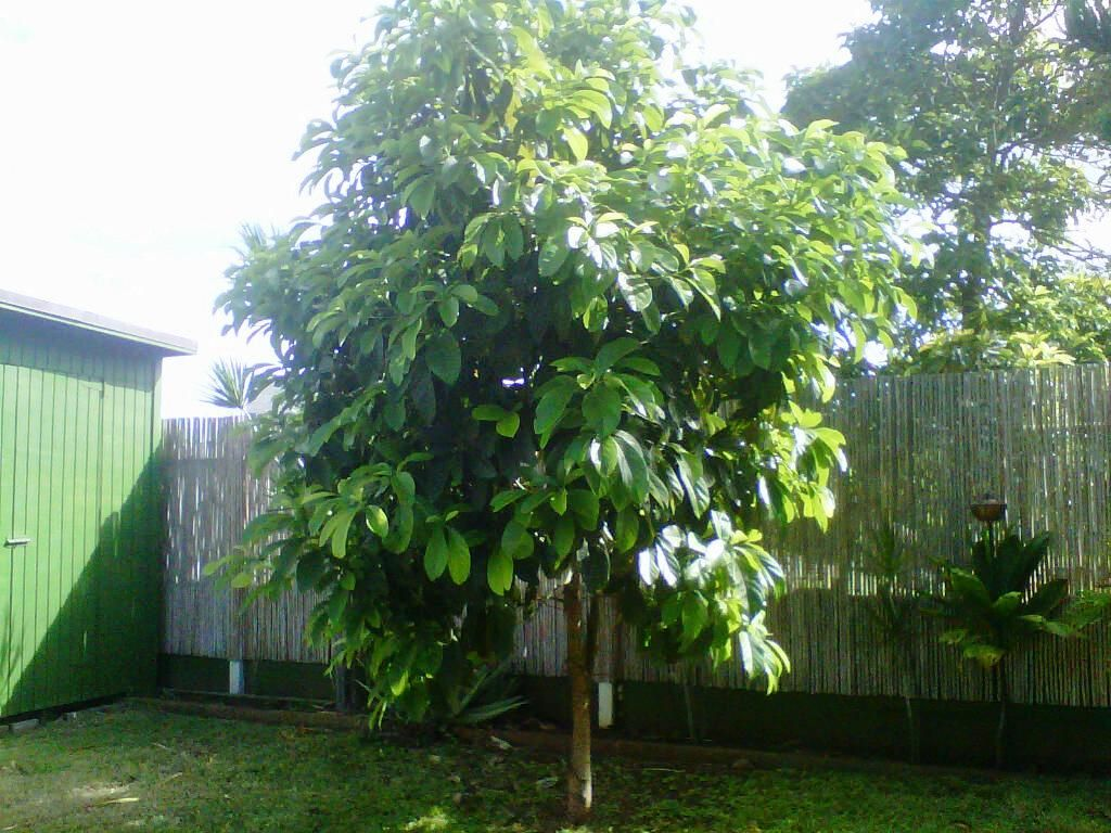 i think there 39 s room on the side for an avocado tree not ugly patio permaculture pinterest. Black Bedroom Furniture Sets. Home Design Ideas