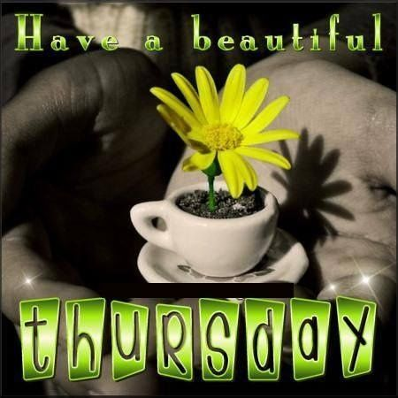Have a beautiful Thursday quotes quote flower days of the week thursday thursday quotes