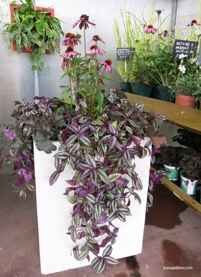Paisaje libre ideas y composiciones de plantas para for Planta arbustos para jardineras