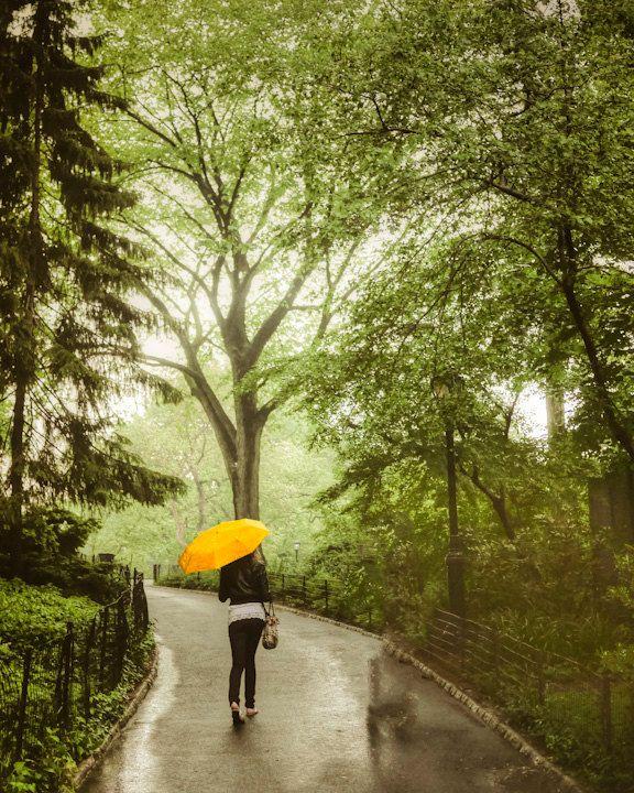 Umbrella In Central Park - Spring Rain Photograph