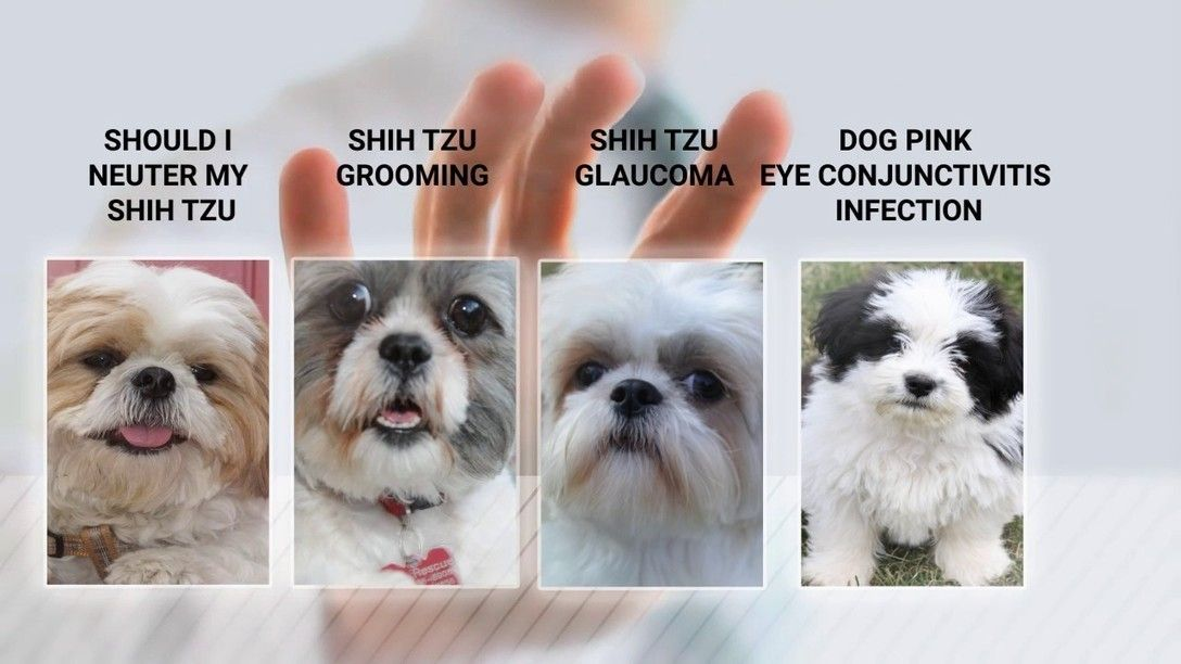Pin By The Shih Tzu Expert Pet Care On The Best Of Shih Tzu
