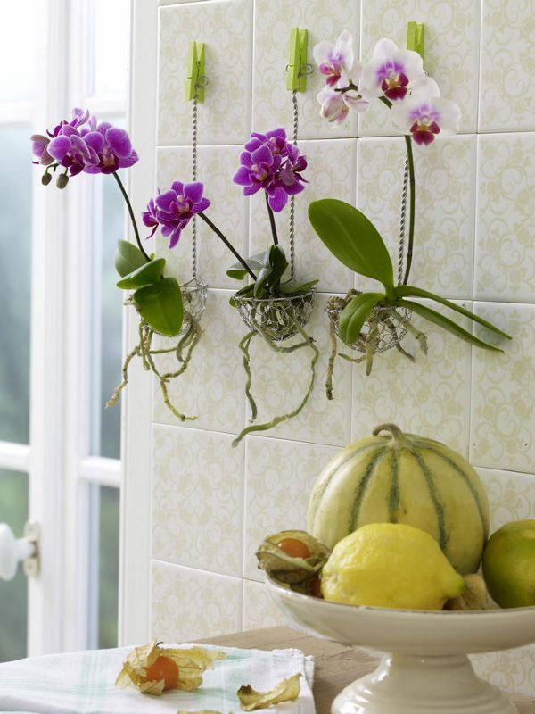 Entzuckend Küchendeko Zum Selbermachen   944329_orchideenInDrahtkoerbchen_600x80011