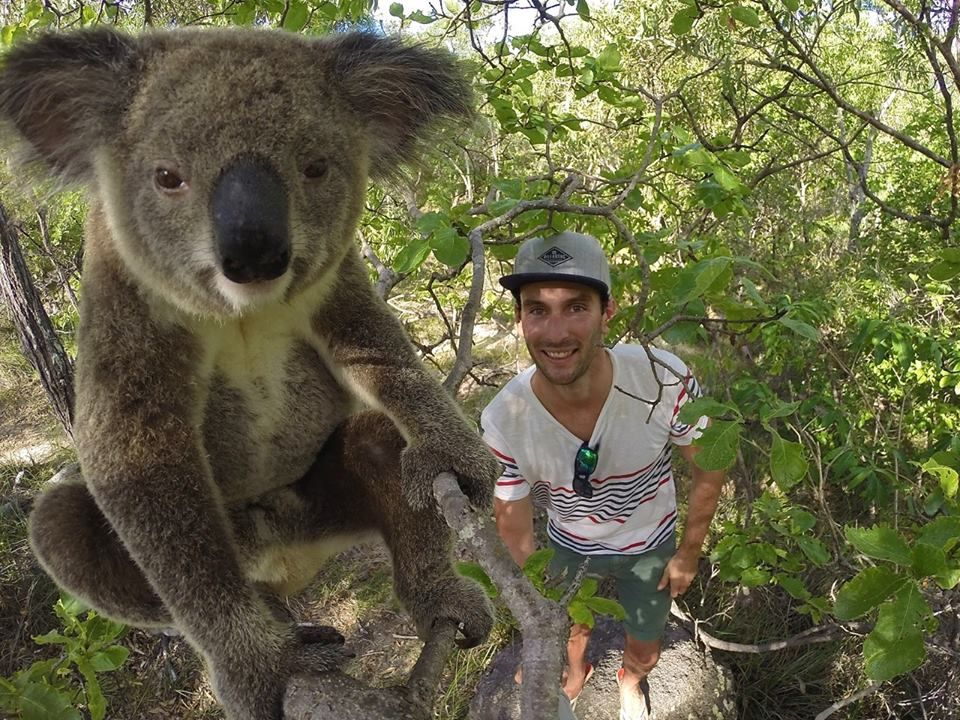 koala! :D
