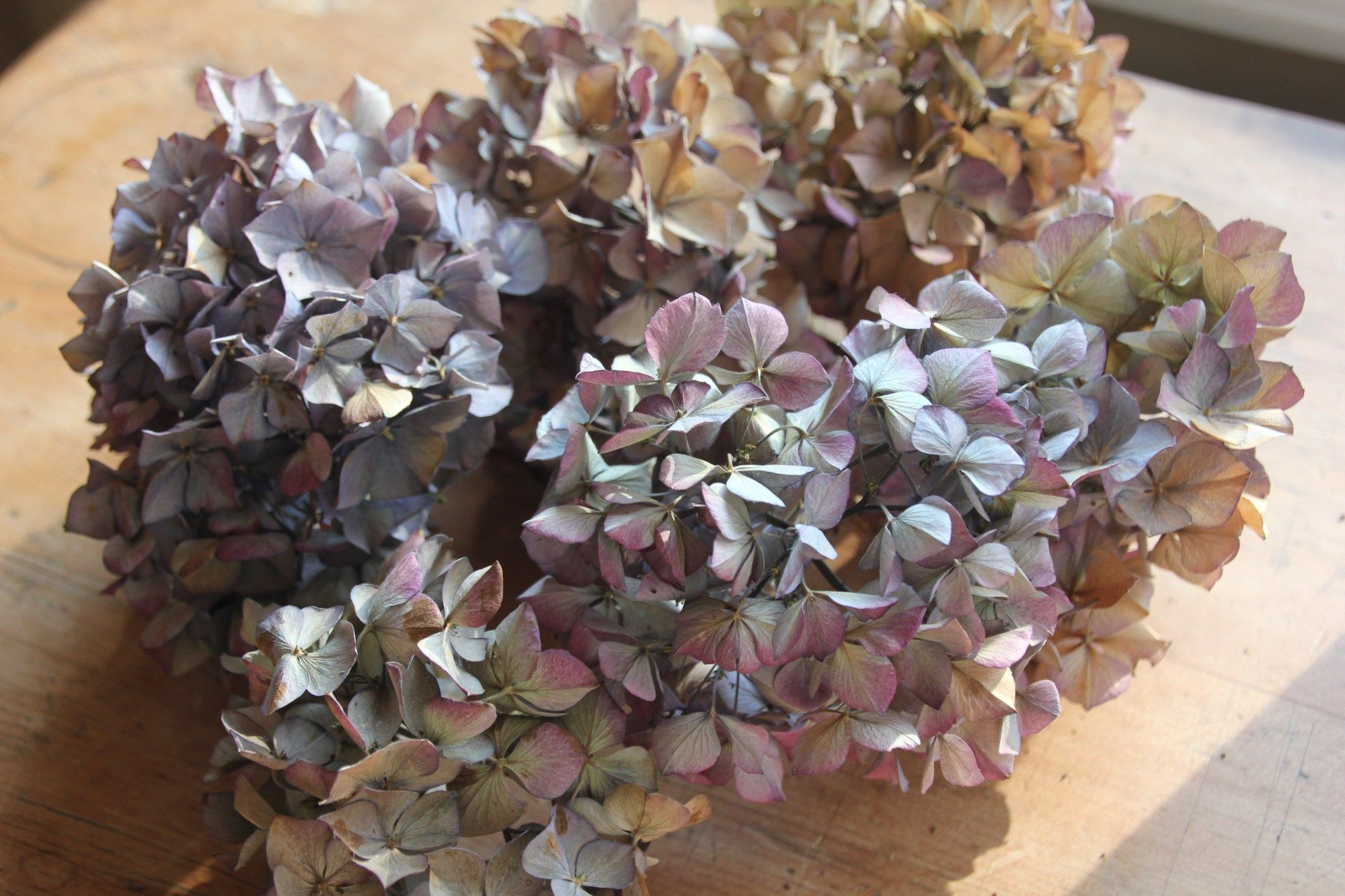 How To Dry Hydrangeas And Make A Dried Hydrangea Wreath Dried Hydrangeas Dried Flowers Diy Dried Wreath