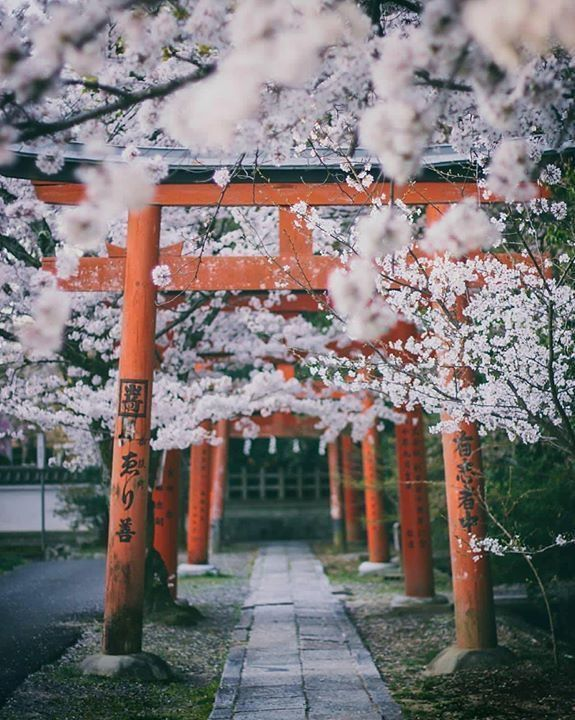 Pin by Yu Ming on Cảnh đẹp | Japan photography, Aesthetic japan, Blossom  trees