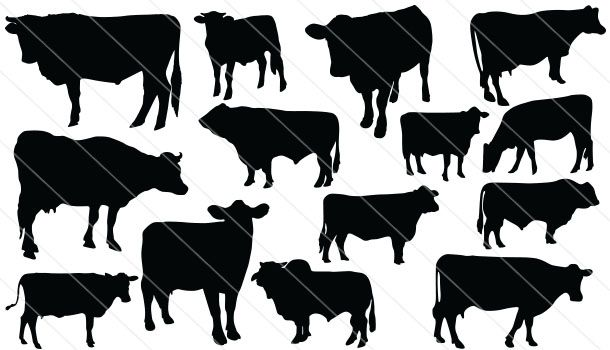 Cattle Silhouette Vector 14 Silhouette Vector