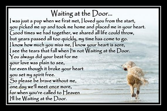 Waiting At The Door Dog Poems Pet Dogs Photos Pet Poems