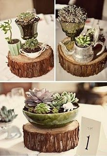 cute way to do succulents